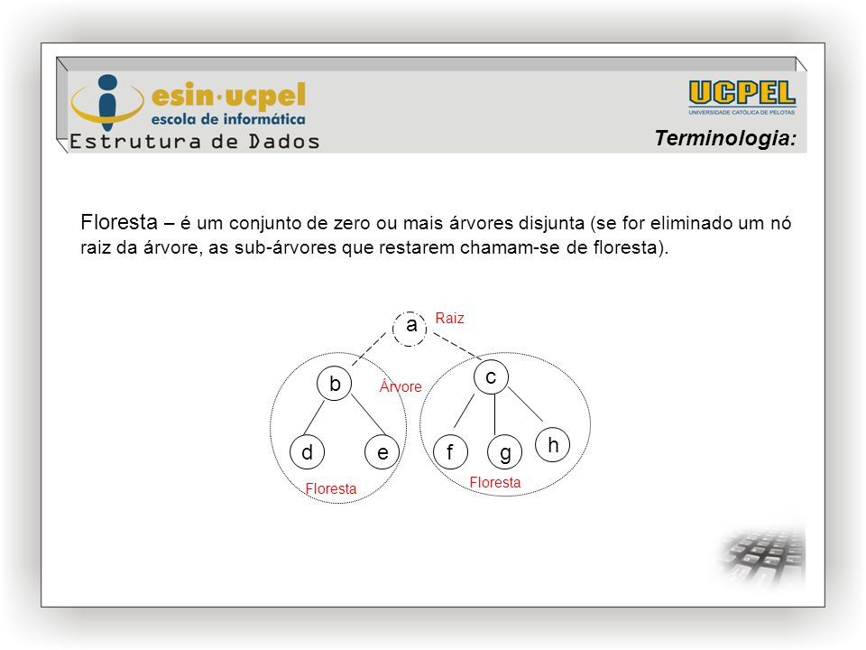 Terminologia: Floresta – é um conjunto de zero ou mais árvores disjunta (se for eliminado um nó raiz da árvore, as sub-árvores que restarem chamam-se