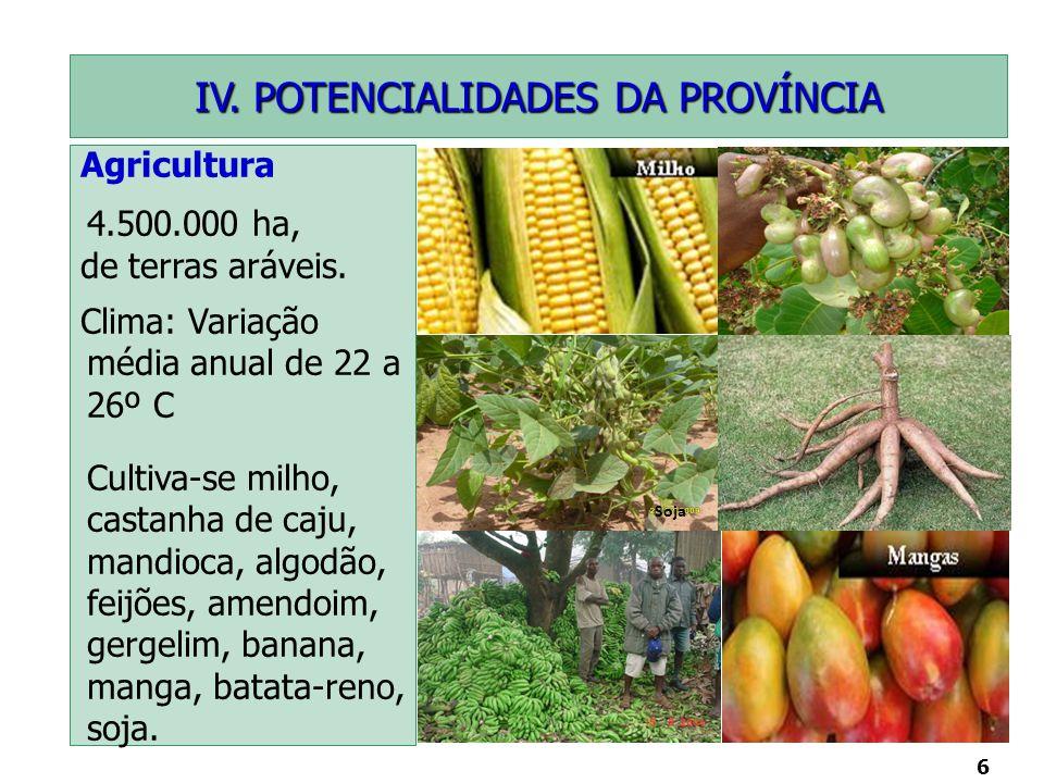 6 Soja Agricultura 4.500.000 ha, de terras aráveis. Clima: Variação média anual de 22 a 26º C Cultiva-se milho, castanha de caju, mandioca, algodão, f