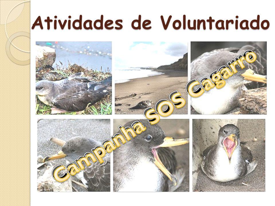 Atividades de Voluntariado