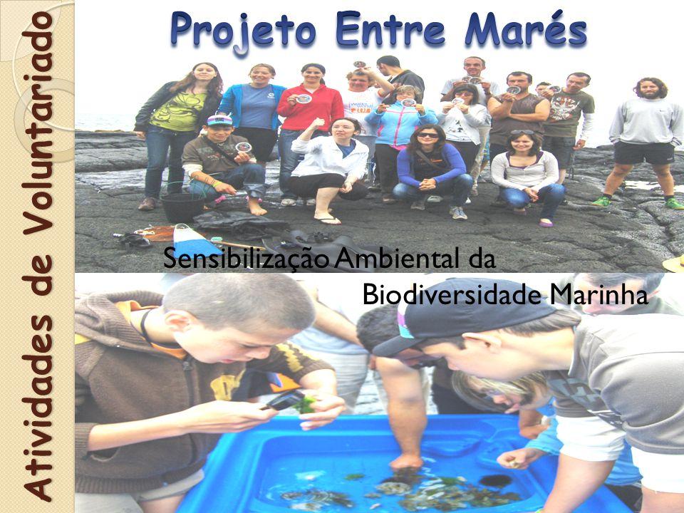 Sensibilização Ambiental da Biodiversidade Marinha Atividades de Voluntariado