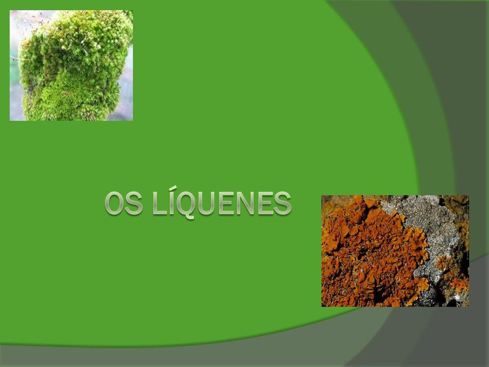 O que são líquenes.Os líquenes são seres vivos formados por um fungo e uma alga.
