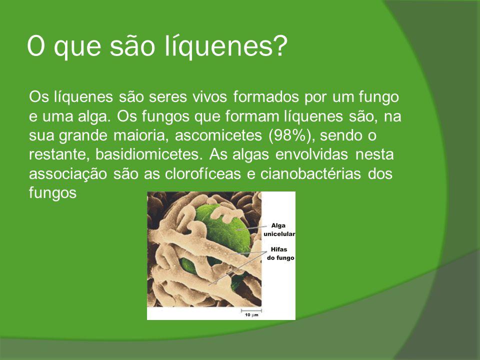 O que são líquenes? Os líquenes são seres vivos formados por um fungo e uma alga. Os fungos que formam líquenes são, na sua grande maioria, ascomicete