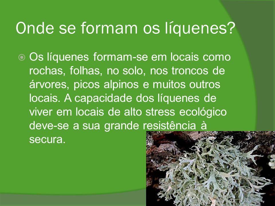 Onde se formam os líquenes?  Os líquenes formam-se em locais como rochas, folhas, no solo, nos troncos de árvores, picos alpinos e muitos outros loca