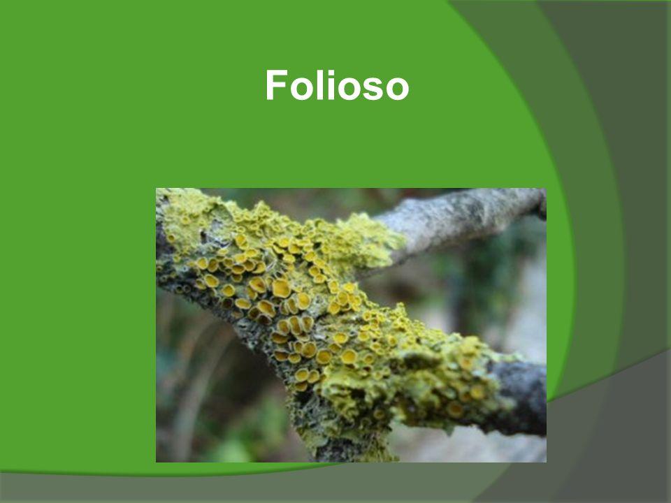 Folioso
