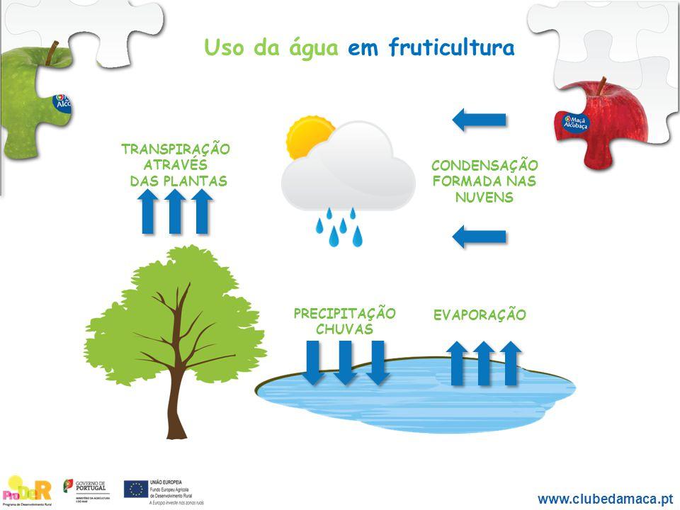 CONDENSAÇÃO FORMADA NAS NUVENS TRANSPIRAÇÃO ATRAVÉS DAS PLANTAS PRECIPITAÇÃO CHUVAS EVAPORAÇÃO www.clubedamaca.pt