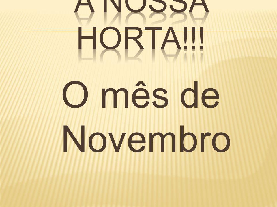O mês de Novembro