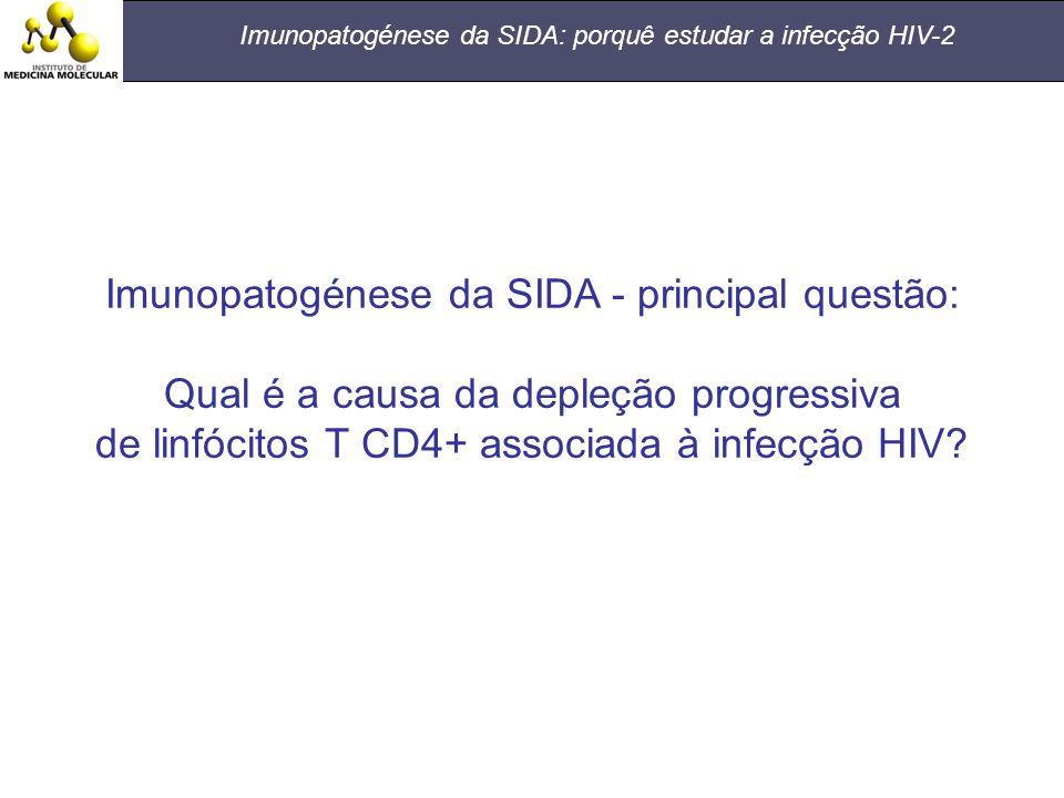 Imunopatogénese da SIDA: porquê estudar a infecção HIV-2 Imunopatogénese da SIDA - principal questão: Qual é a causa da depleção progressiva de linfóc