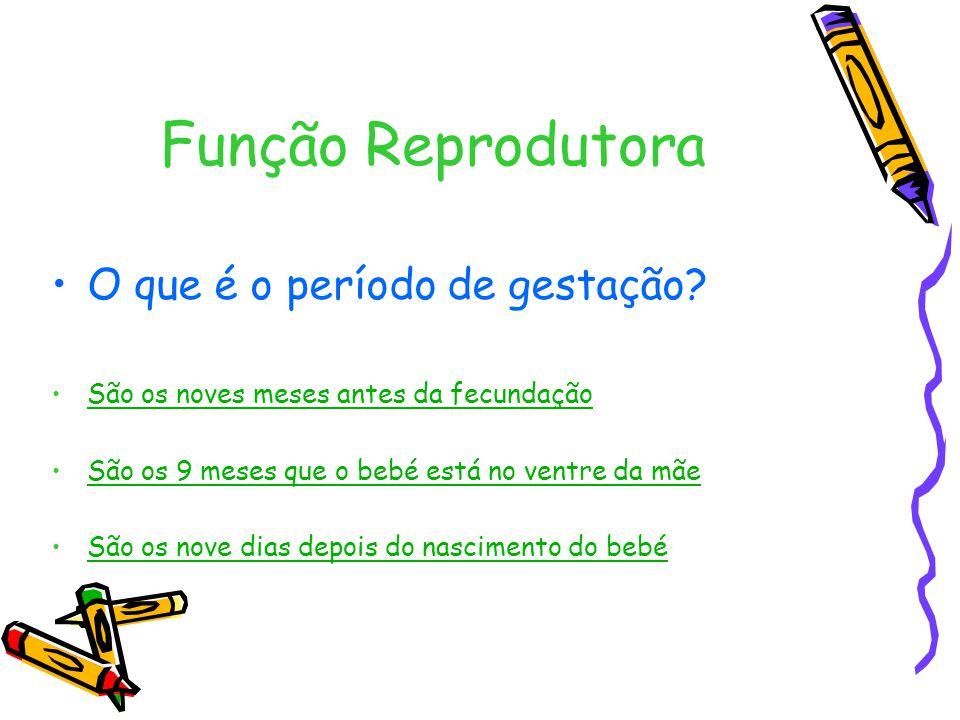 Função Reprodutora O que é o período de gestação.