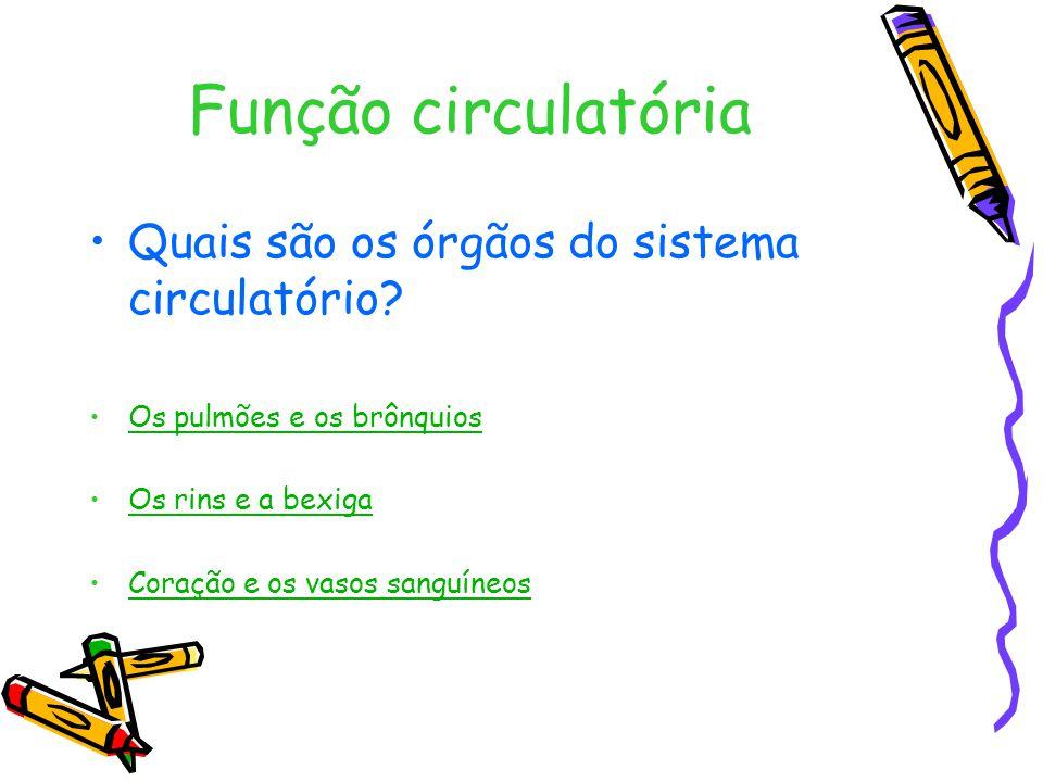 Função circulatória Quais são os órgãos do sistema circulatório.