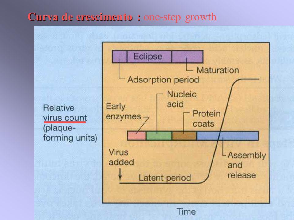 Curva de crescimento : Curva de crescimento : one-step growth