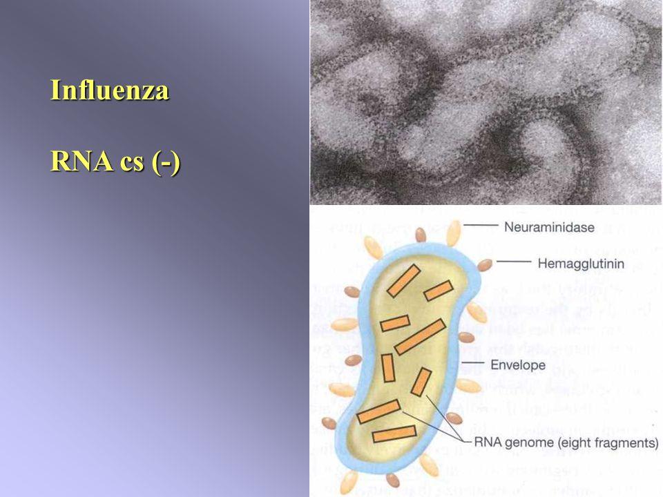 Influenza RNA cs (-)