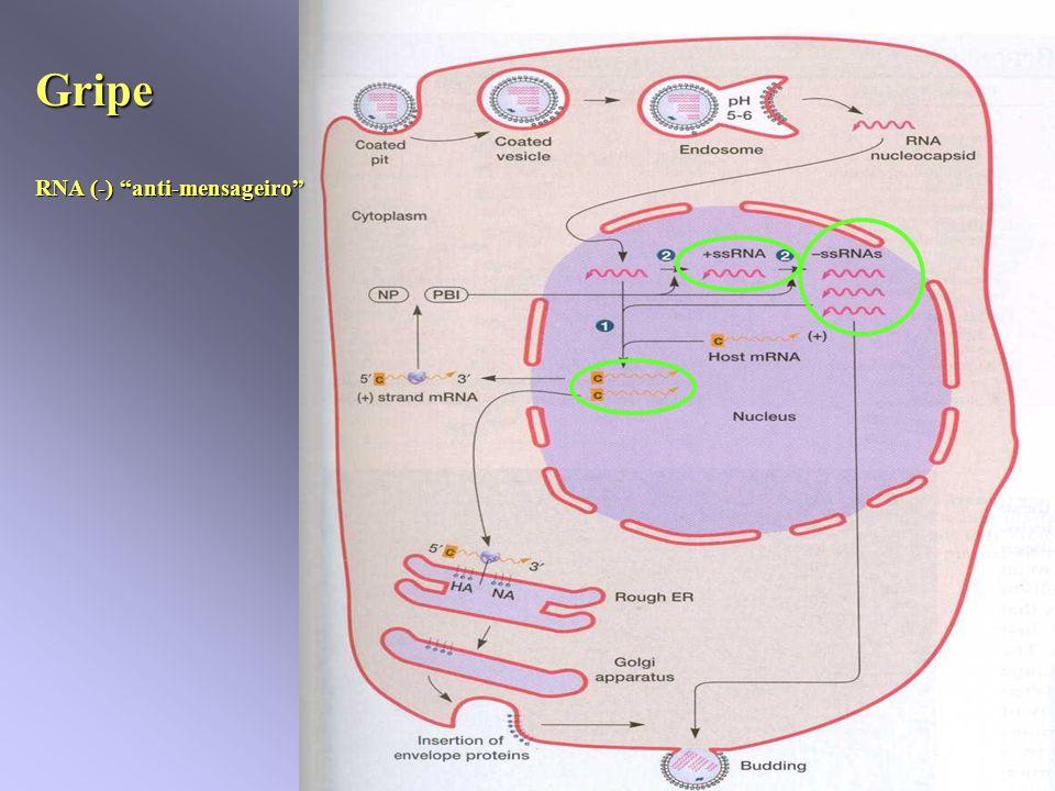 Gripe RNA (-) anti-mensageiro