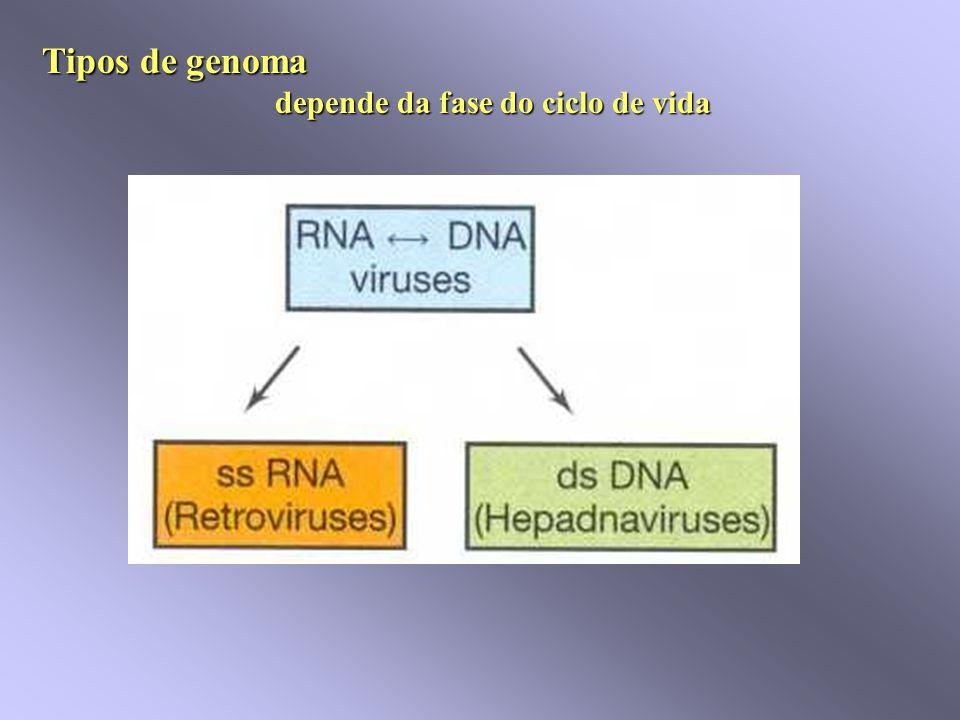 Organização do nucleocapsídeo Vírus do mosaico do Tabaco