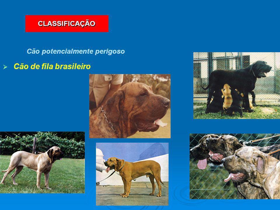   Cão de fila brasileiro Cão potencialmente perigoso CLASSIFICAÇÃO