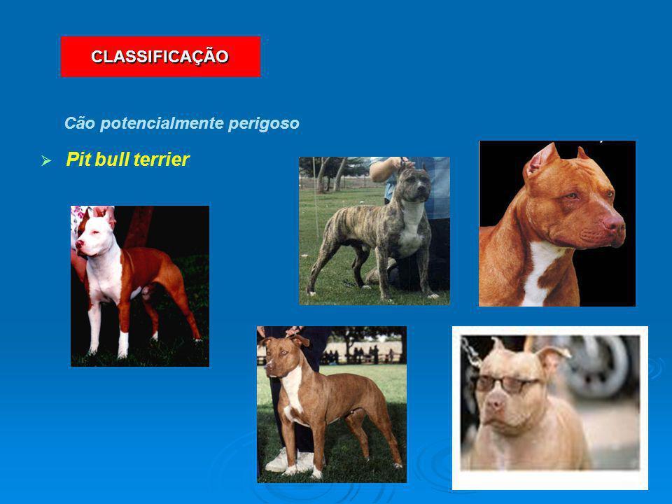   Pit bull terrier Cão potencialmente perigoso CLASSIFICAÇÃO