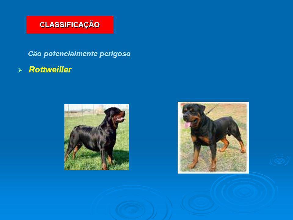   Rottweiller Cão potencialmente perigoso CLASSIFICAÇÃO