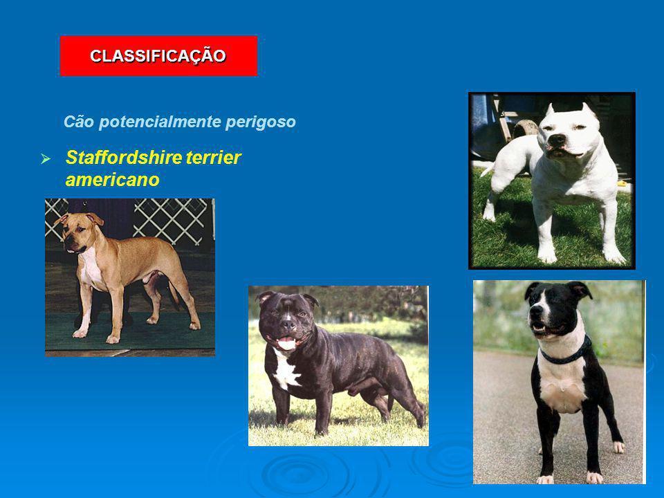   Staffordshire terrier americano Cão potencialmente perigoso CLASSIFICAÇÃO