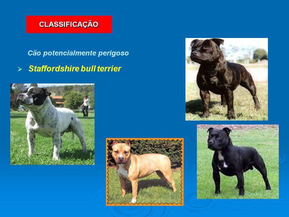   Staffordshire bull terrier Cão potencialmente perigoso CLASSIFICAÇÃO