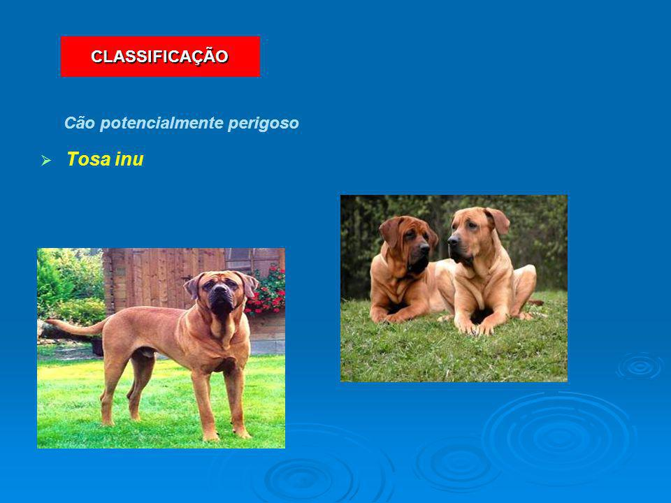   Tosa inu Cão potencialmente perigoso CLASSIFICAÇÃO