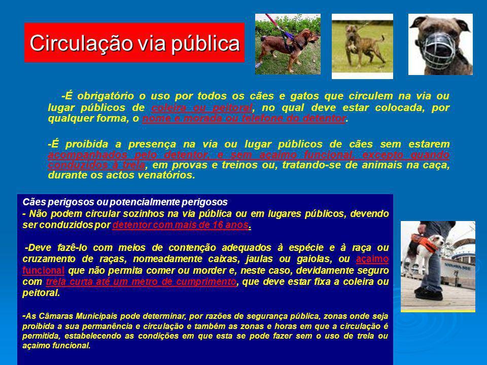 Circulação via pública -É obrigatório o uso por todos os cães e gatos que circulem na via ou lugar públicos de coleira ou peitoral, no qual deve estar