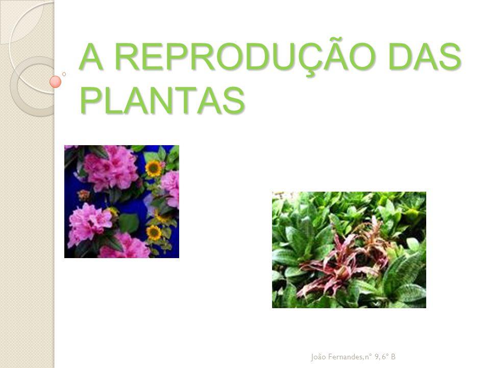 A REPRODUÇÃO DAS PLANTAS João Fernandes, nº 9, 6º B