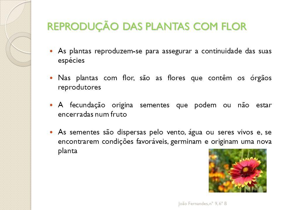 REPRODUÇÃO DAS PLANTAS COM FLOR As plantas reproduzem-se para assegurar a continuidade das suas espécies Nas plantas com flor, são as flores que contê