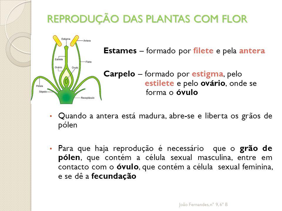 REPRODUÇÃO DAS PLANTAS COM FLOR Estames – formado por filete e pela antera Carpelo – formado por estigma, pelo estilete e pelo ovário, onde se forma o