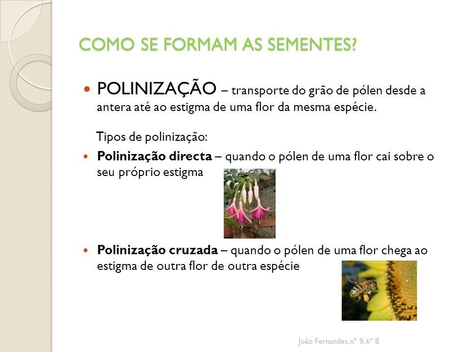 COMO SE FORMAM AS SEMENTES? POLINIZAÇÃO – transporte do grão de pólen desde a antera até ao estigma de uma flor da mesma espécie. Tipos de polinização