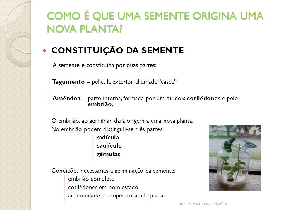 COMO É QUE UMA SEMENTE ORIGINA UMA NOVA PLANTA? CONSTITUIÇÃO DA SEMENTE A semente é constituída por duas partes: Tegumento – película exterior chamada