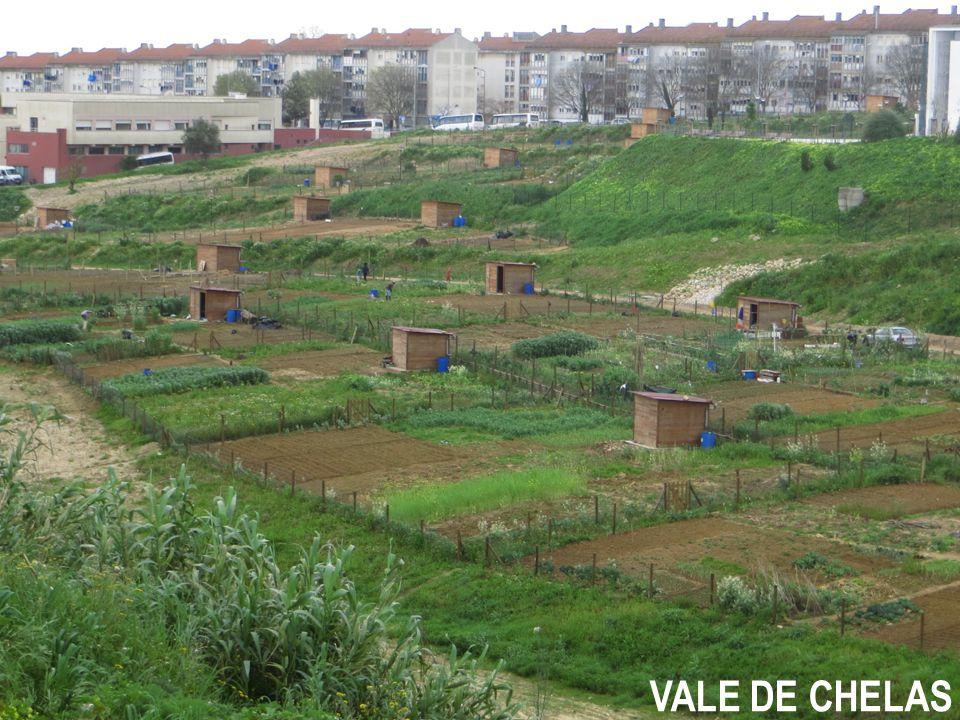 VALE DE CHELAS