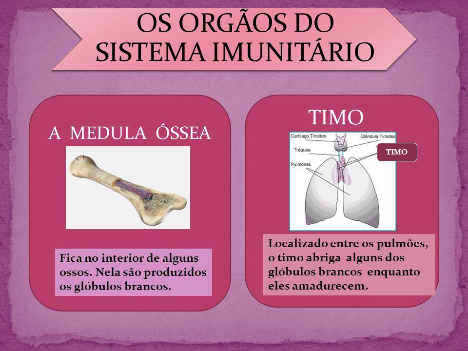 A CERA DIFICULTA A ENTRADA DE MICROORGANISMOS NO CANAL DA ORELHA.