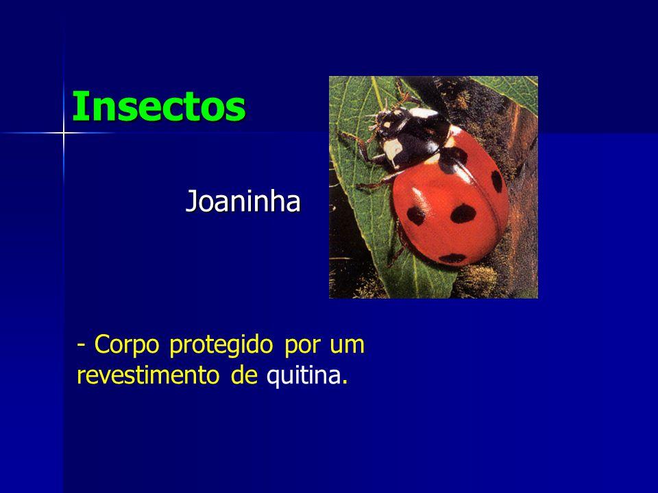 Joaninha Insectos - Corpo protegido por um revestimento de quitina.