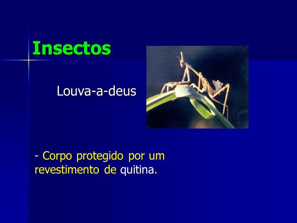 Louva-a-deus Insectos - Corpo protegido por um revestimento de quitina.