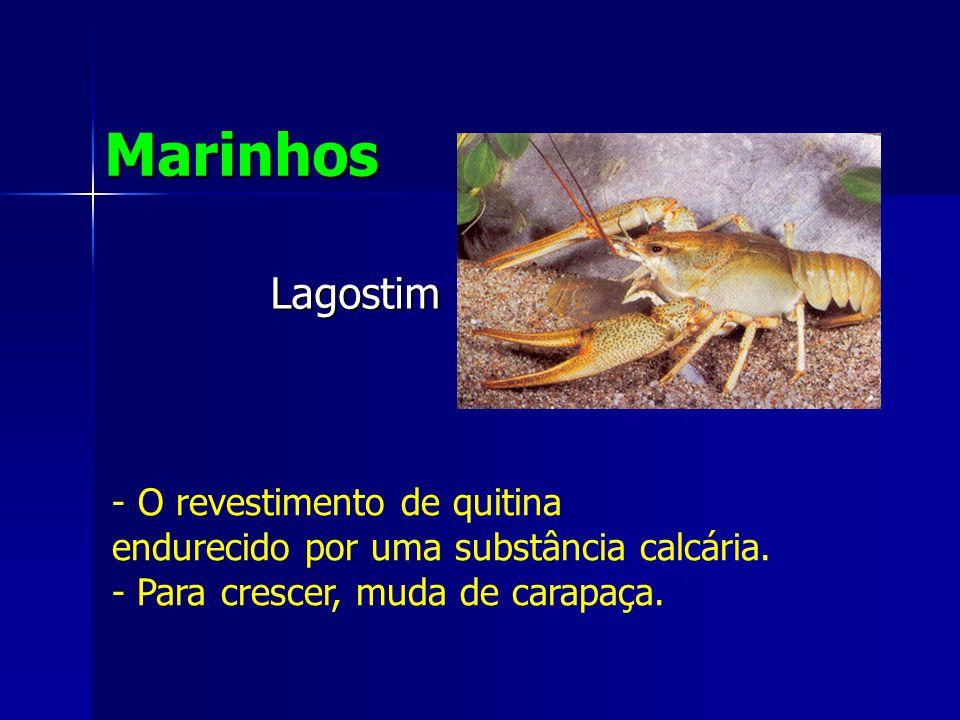 Lagostim Marinhos - O revestimento de quitina endurecido por uma substância calcária.