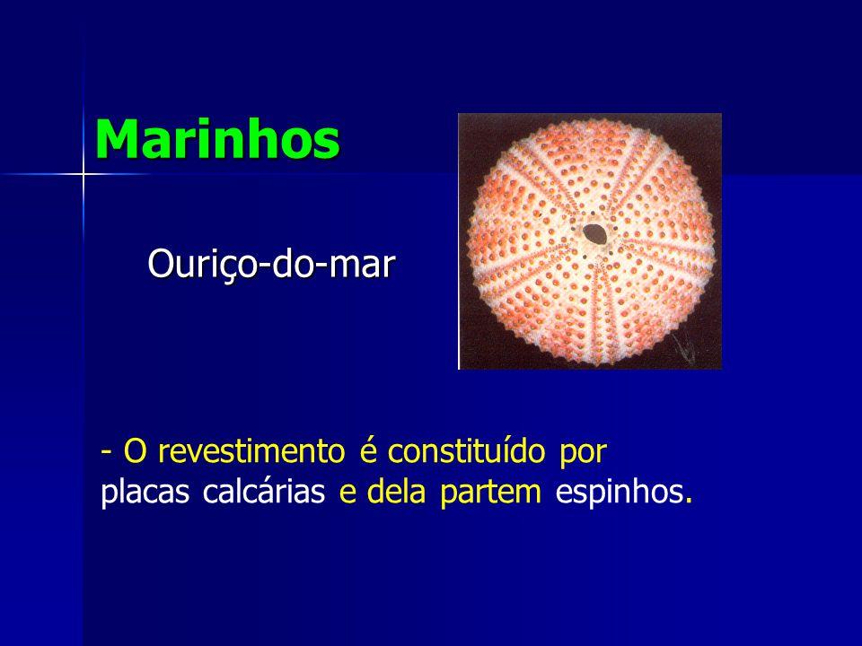 Ouriço-do-mar Marinhos - O revestimento é constituído por placas calcárias e dela partem espinhos.