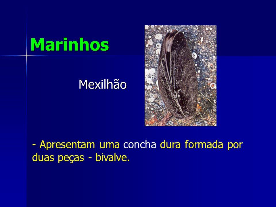 Mexilhão Marinhos - Apresentam uma concha dura formada por duas peças - bivalve.