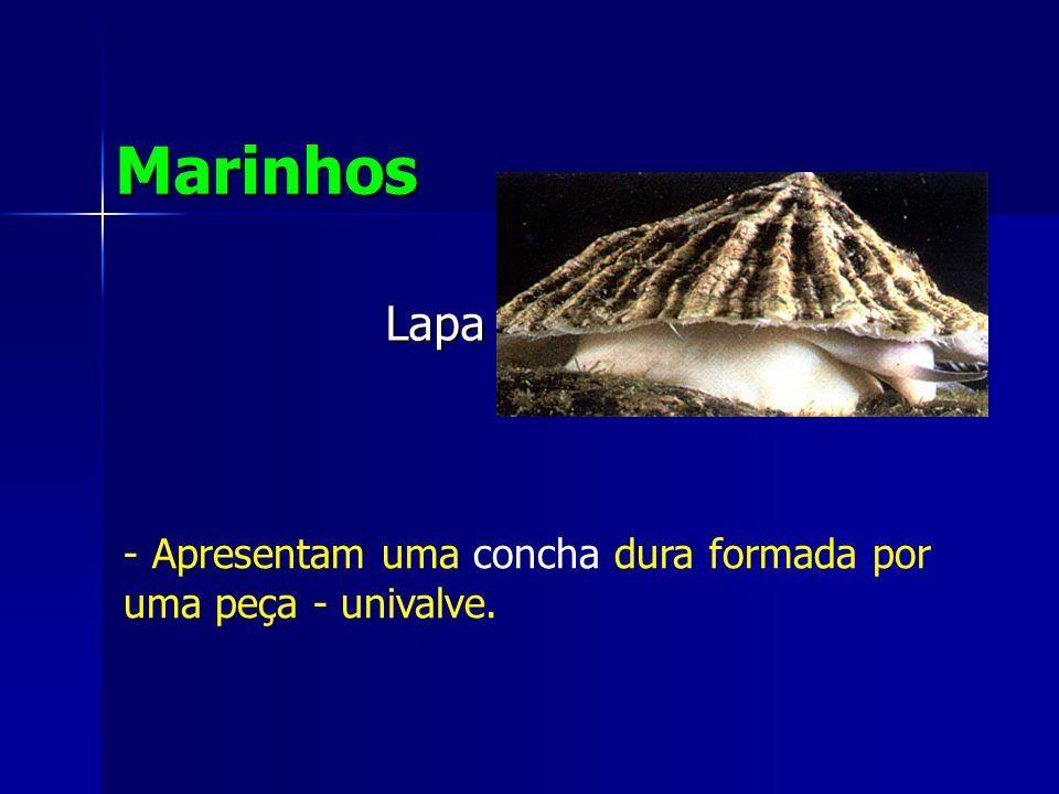 Lapa Marinhos - Apresentam uma concha dura formada por uma peça - univalve.
