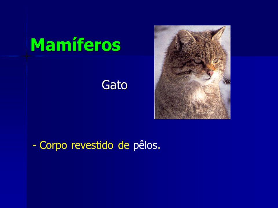 Gato Mamíferos - Corpo revestido de pêlos.