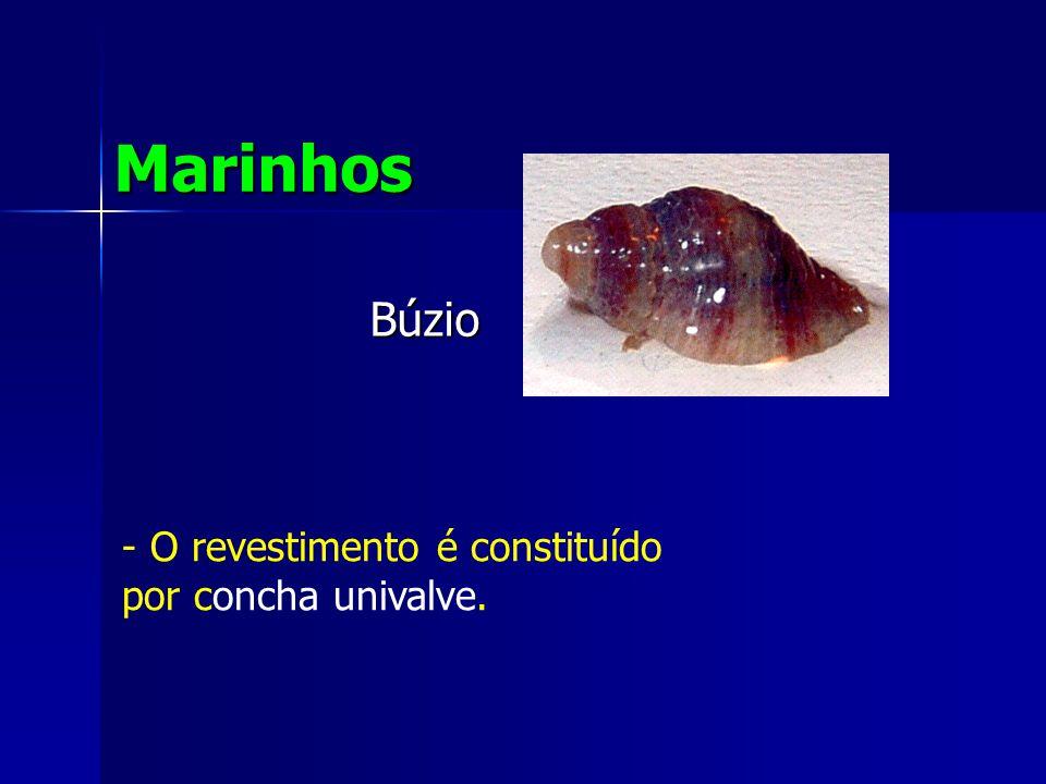 Búzio Marinhos - O revestimento é constituído por concha univalve.
