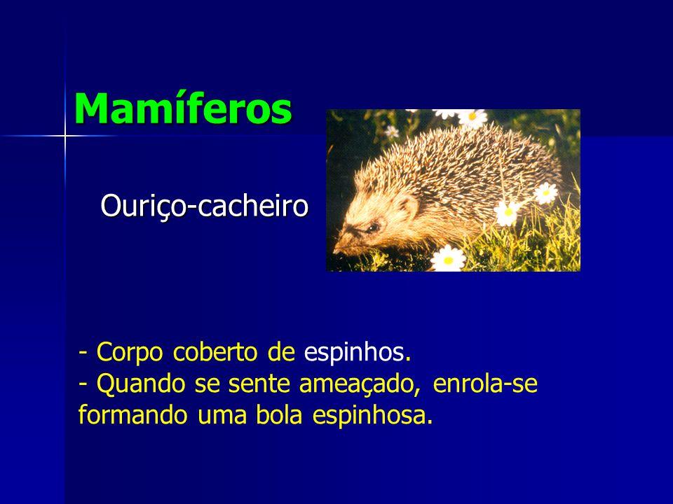 Ouriço-cacheiro Mamíferos - Corpo coberto de espinhos.