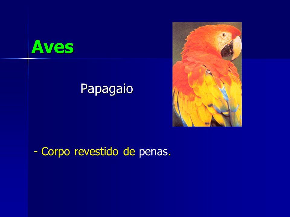Papagaio Aves - Corpo revestido de penas.