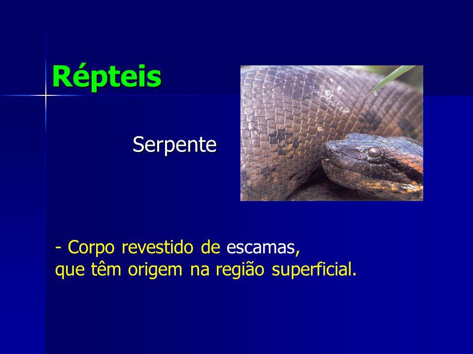 Serpente Répteis - Corpo revestido de escamas, que têm origem na região superficial.