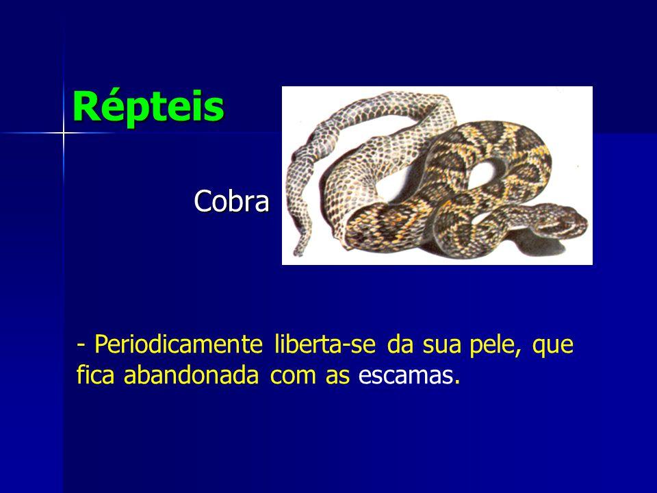Cobra Répteis - Periodicamente liberta-se da sua pele, que fica abandonada com as escamas.
