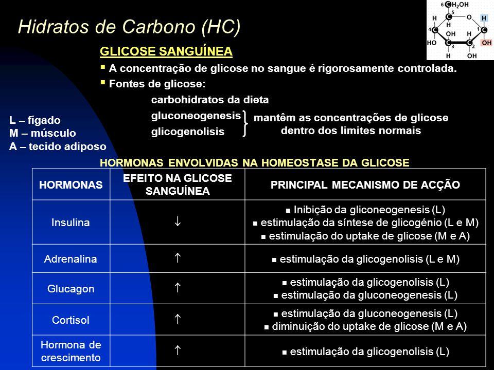 Hidratos de Carbono (HC) GLICOSE SANGUÍNEA  A concentração de glicose no sangue é rigorosamente controlada.  Fontes de glicose: carbohidratos da die