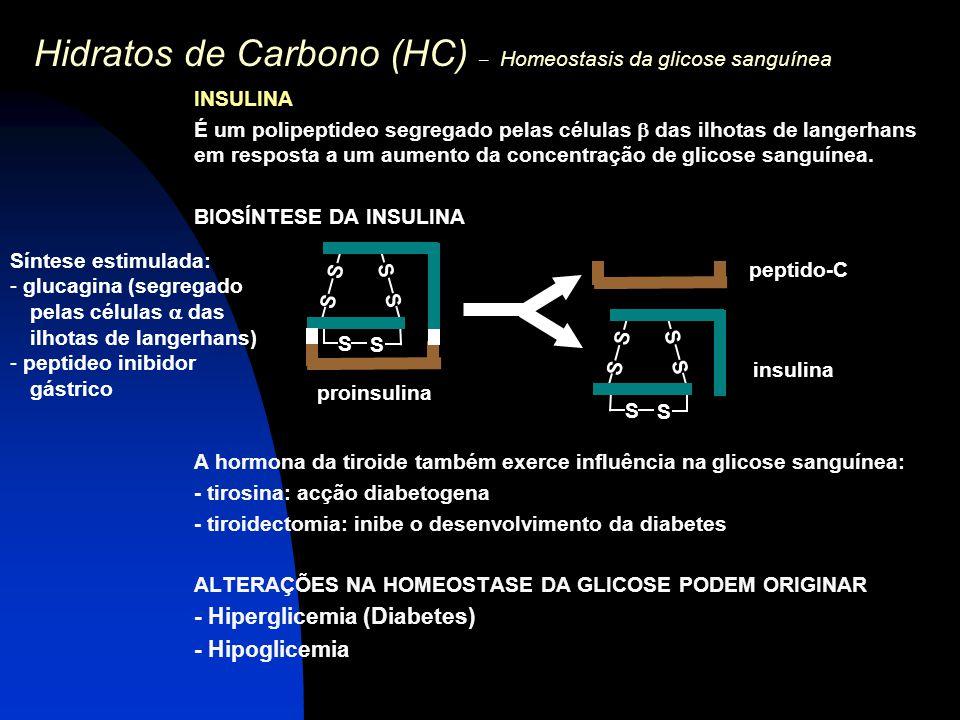 Hidratos de Carbono (HC) – Homeostasis da glicose sanguínea INSULINA É um polipeptideo segregado pelas células  das ilhotas de langerhans em resposta