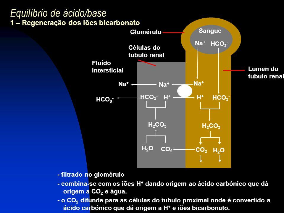 Equilíbrio de ácido/base 1 – Regeneração dos iões bicarbonato - filtrado no glomérulo - combina-se com os iões H + dando origem ao ácido carbónico que