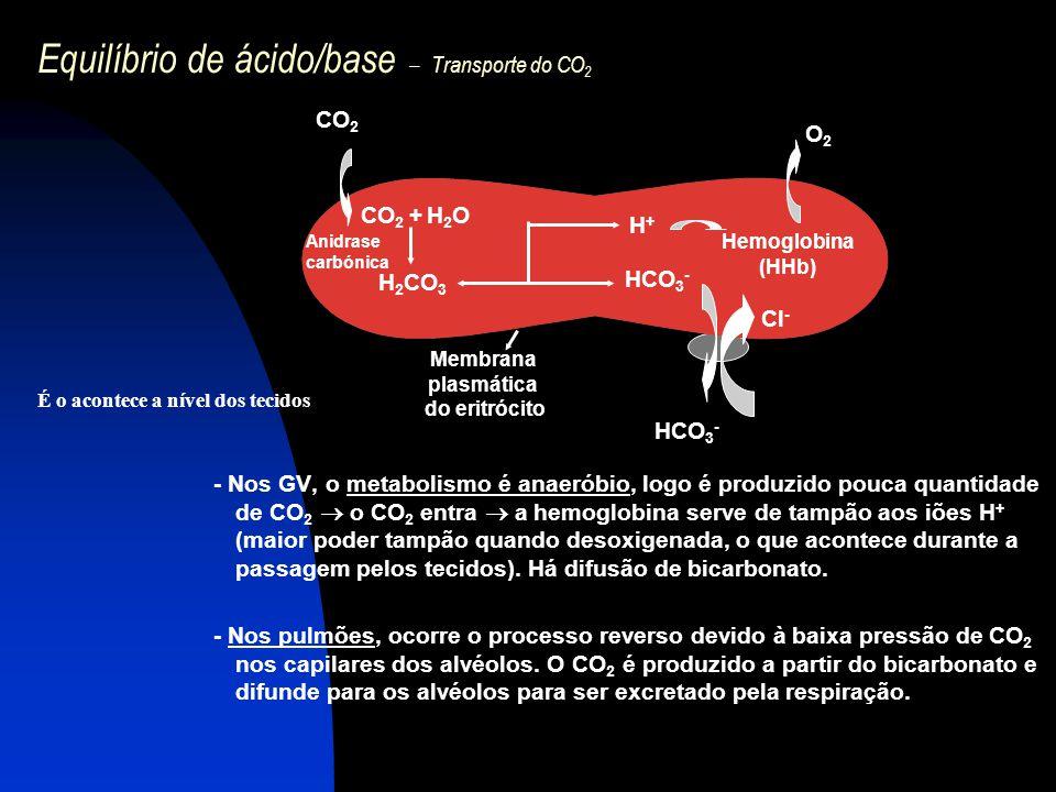 Equilíbrio de ácido/base – Transporte do CO 2 - Nos GV, o metabolismo é anaeróbio, logo é produzido pouca quantidade de CO 2  o CO 2 entra  a hemogl