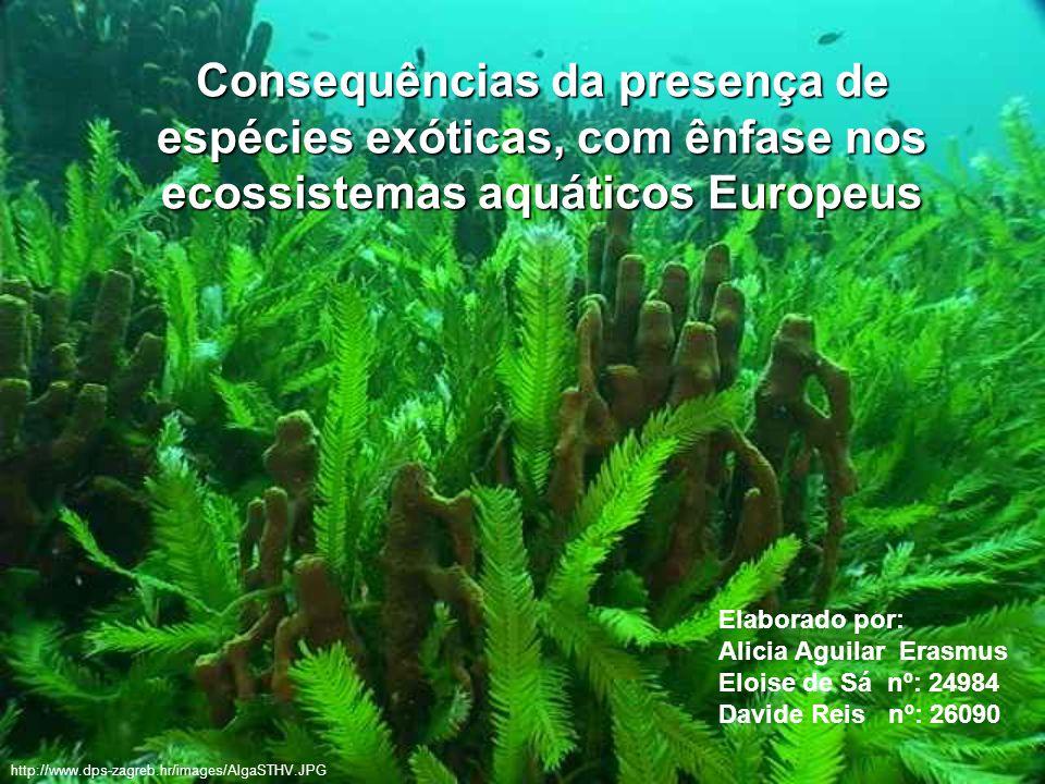 Consequências da presença de espécies exóticas, com ênfase nos ecossistemas aquáticos Europeus Elaborado por: Alicia Aguilar Erasmus Eloise de Sá nº:
