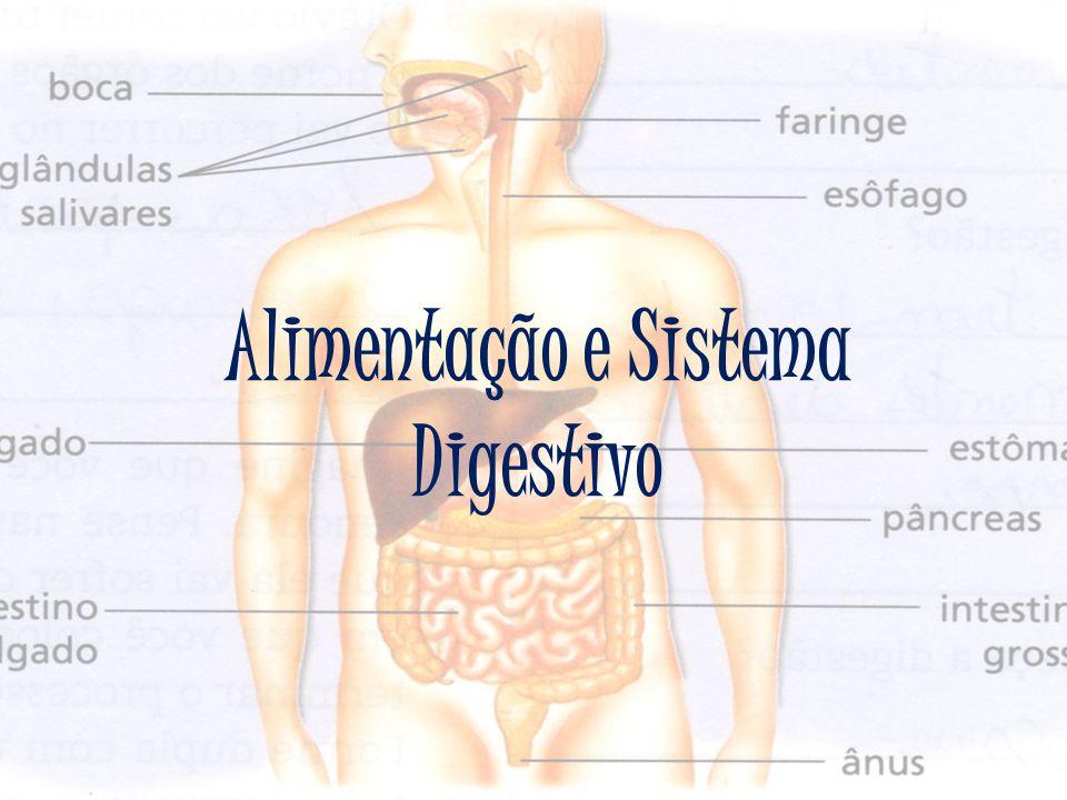 No esófago, o bolo alimentar é dirigido para o estômago devido aos movimentos peristálticos.