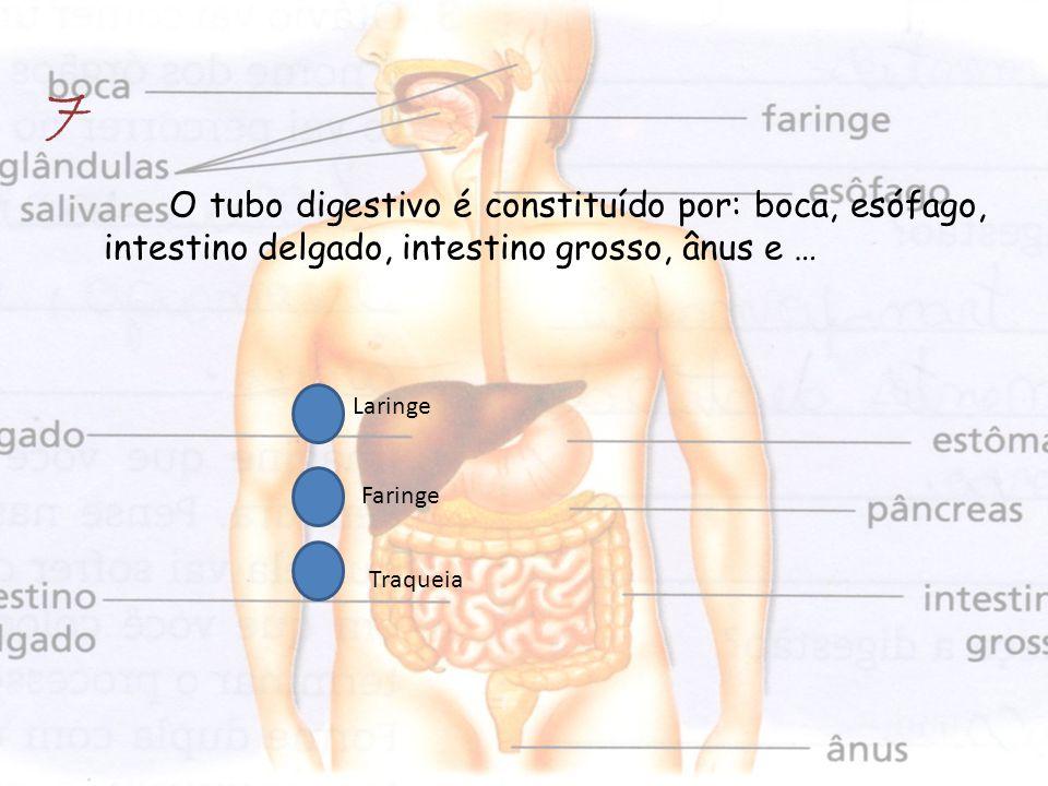 O tubo digestivo é constituído por: boca, esófago, intestino delgado, intestino grosso, ânus e … 7 Laringe Faringe Traqueia
